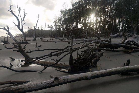 棕櫚島張圖片