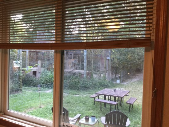 Exotic Feline Rescue Center: View out of guest room window