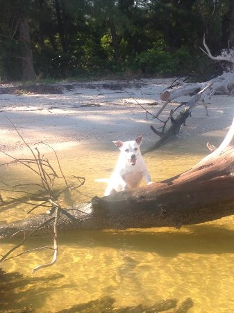 Homosassa, FL: bring your dog, they're allowed on the rental boats