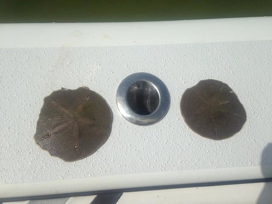 Homosassa, FL: you might find some starfish or cool shells down below