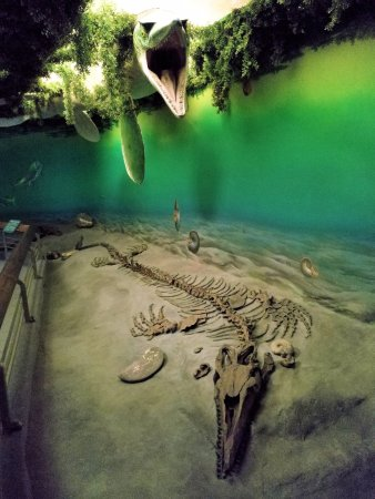 Royal Saskatchewan Museum: A Diorama Of The Late Cretaceous Western  Interior Seaway.