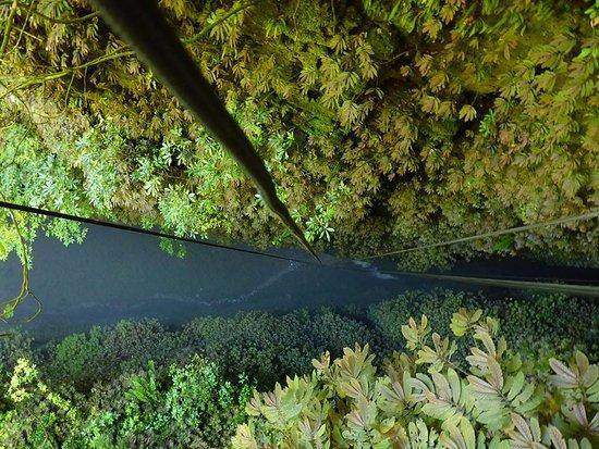 Waitomo Adventures: 100 Meter Repel