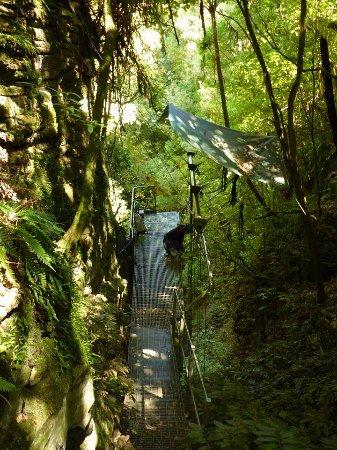 Waitomo Adventures: Top of the Repel