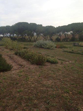 plantaciones de hierbas aromáticas