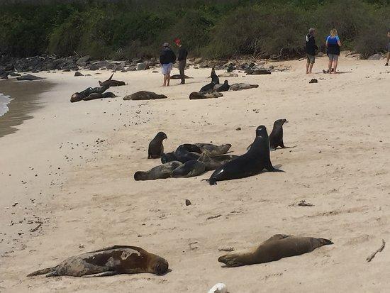 Galapagos Alternative: On the beach with sea lions, Santa Fe Island
