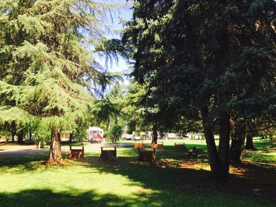Roseburg, OR: Lots of large shade trees!