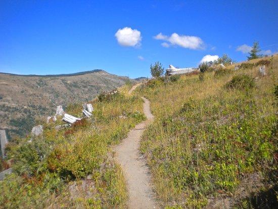 Amboy, WA: Coldwater Ridge Trail