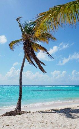 Bayahibe, République dominicaine : Isla Saona.