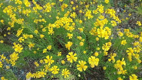 Troy, NC: Wildflowers