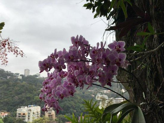 Casa Caminho do Corcovado: photo1.jpg