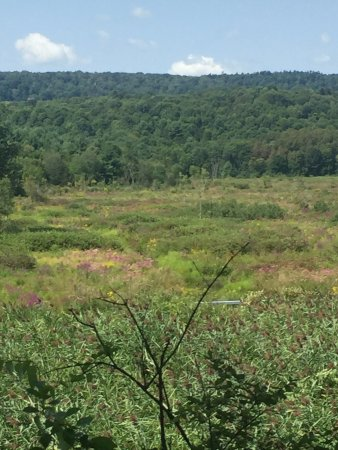 Millerton, Estado de Nueva York: Vistas
