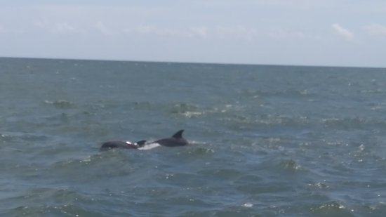 Myrtle Beach Watersports Dolphins Off North