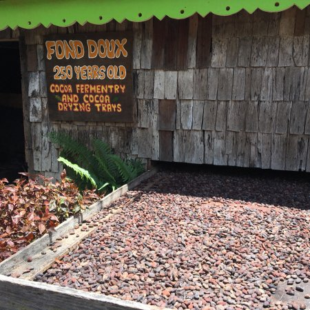 Fond Doux Plantation & Resort: Fond Doux is a working cocoa plantation so be sure to go on a tour!