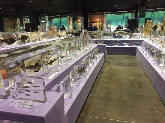 Okhotsk Sea Ice Museum of Hokkaido GIZA
