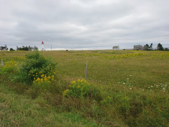 Maplehurst Properties: Pamper Island lighthouse from the road