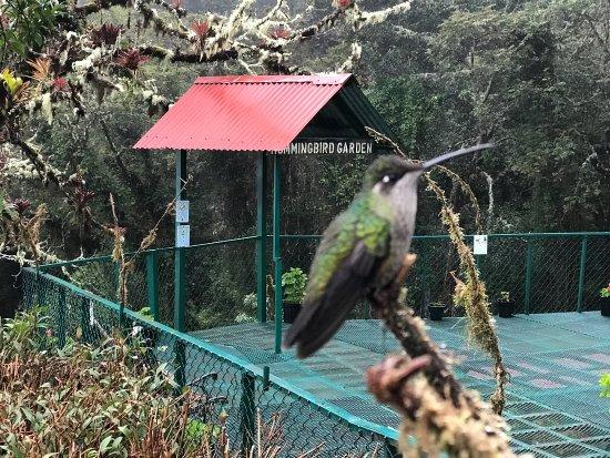 Paraiso Quetzal Lodge: photo7.jpg