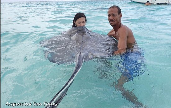 Acquarius Sea Tours : Kiss a Sting Ray 7 years good luck. (With the STING RAY whisper himself) amazing experience