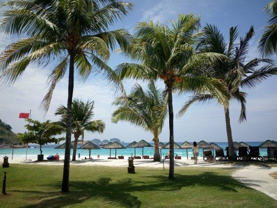 Laguna Redang Island Resort: 酒店種很多椰子樹