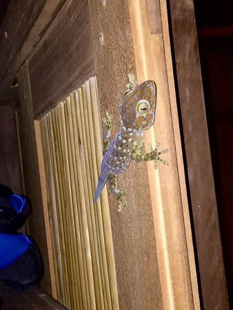 Six Senses Ninh Van Bay : Little gecko friend in our room, If you're scared of lizards & geckos this place might not be fo