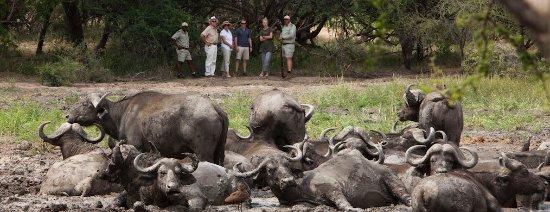 Kapama Buffalo Camp: Guided Bush Walk