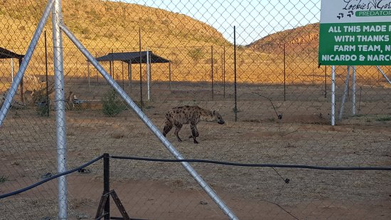 Bela Bela, Sudáfrica: This park has lions, cheetahs, hyena , wild dogs , leopards and a few other animals.