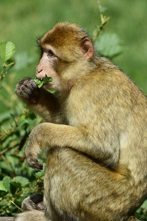 Trentham Monkey Forest: FB_IMG_1503865233430_large.jpg