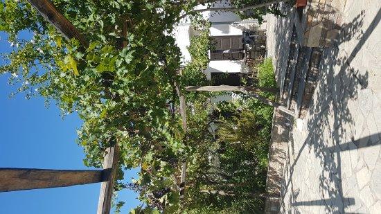 Koropi, Greece: 20170828_114000_large.jpg