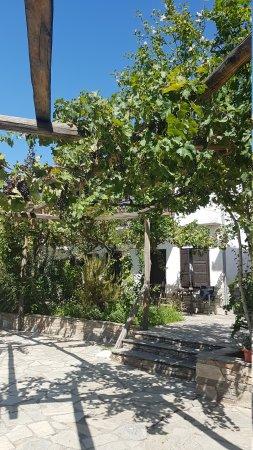 Koropi, اليونان: 20170828_114000_large.jpg