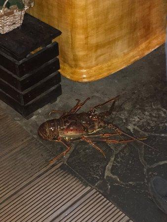 Skipjack's Seafood Grill, Bar & Fish Market : photo2.jpg