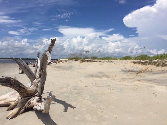 Georgetown, SC: Dunes & driftwood