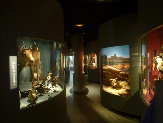 Museum D Histoire Naturelle Dijon 2021 All You Need To Know Before You Go With Photos Tripadvisor