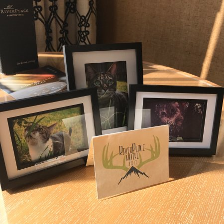 Kimpton RiverPlace Hotel: We were greeted with these awesome photos of our beloved feline friends! What a personal touch!