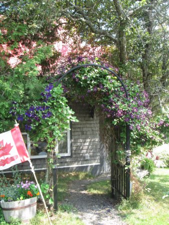 Deer Island, Canada: Clematis covered archway on walkway to the gallery