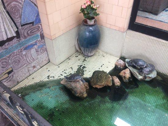 Vasca Da Esterno Per Tartarughe : Vasca tartarughe allingresso hotel sporca e mal tenuta foto di
