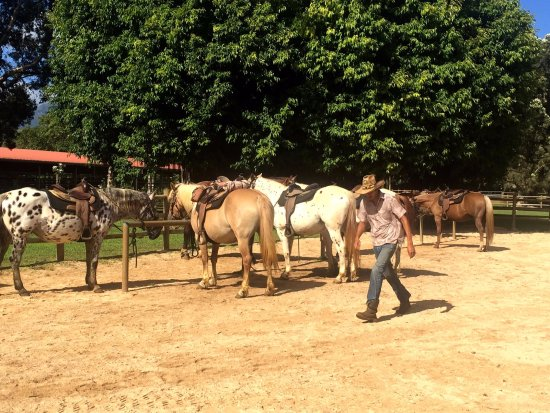 Kilauea, Hawái: Getting our horses ready for the tour