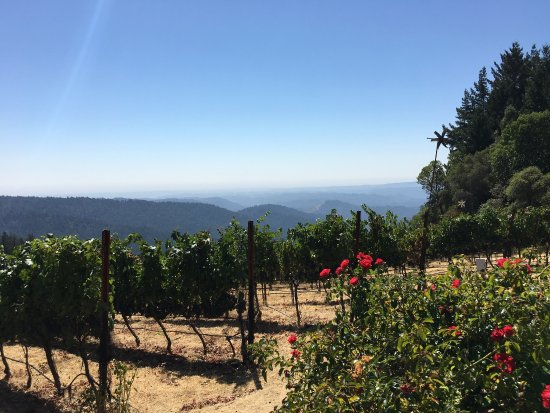 Loma Prieta Winery: photo5.jpg