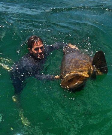 Holmes Beach, Flórida: Goliath Grouper