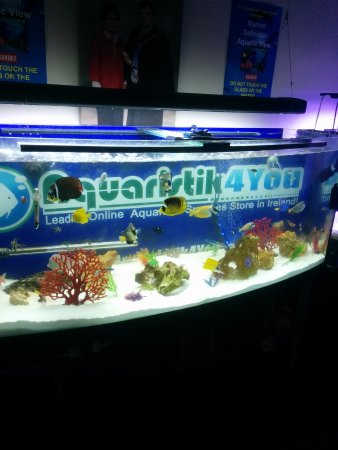 Ballymahon, Irlanda: the fish tank in the living room.
