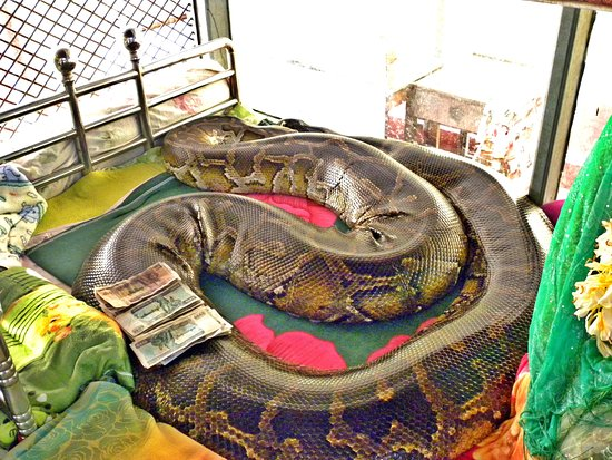 Snake Pagoda Bago All You Need To Know Before You Go