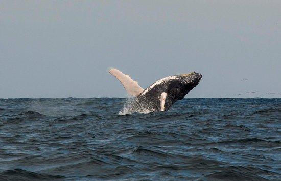 Machalilla Tours: whale watch