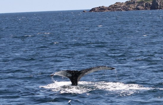 One of the many whale sightings on O'Brien's Whale Watching Tour