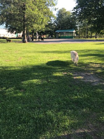 Hotel & Suites Le Dauphin Drummondville: The nearby off leash fenced in dog park!!
