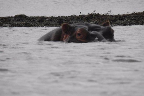 Provincia del valle del Rift, Kenia: More hippos