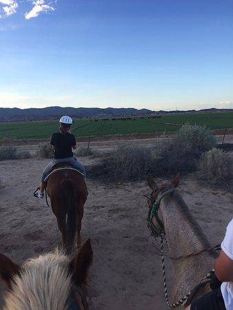 KOLI Equestrian Center: Wild Mustangs in the distance