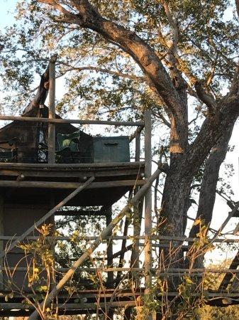 Rhino Walking Safaris at Plains Camp: Sleepout platform.