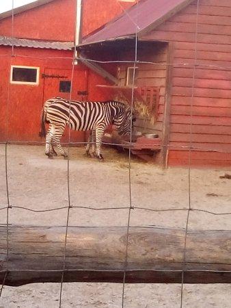Зоопарк Сафари: IMG_20170816_191504_large.jpg