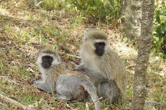 Hell's Gate National Park: Monkeys we saw on our way out