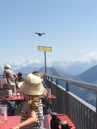 Erlenbach im Simmental, Suíça: Blick von der Terrasse auf die Alpen
