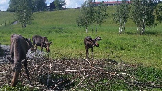 Orrviken, Suecia: Uno spuntino