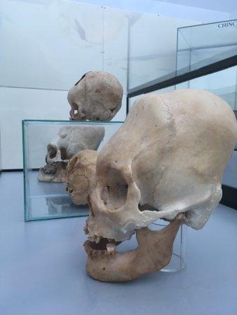 Paracas History Museum -  Juan Navarro Hierro: photo0.jpg